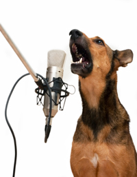 barking_in_mic_R