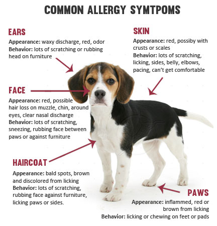 What is excellent for allergies for dogs