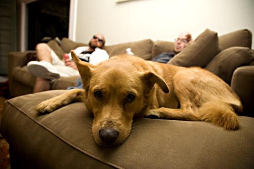 family dog2