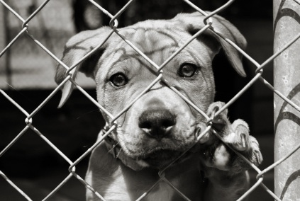 pup-behind-fence-45163937