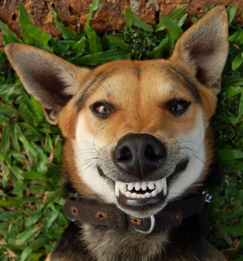 smile-dog-story