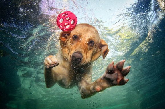 underwater-photos-of-dogs-seth-casteel-8-580x393