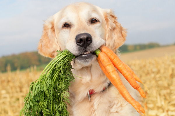 are-carrots-good-for-dogs
