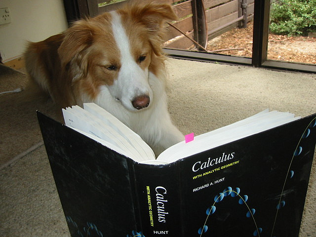 Calculus dog