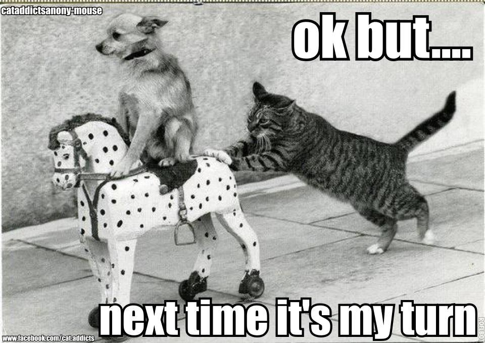 Cat Pushing Dog On Horse