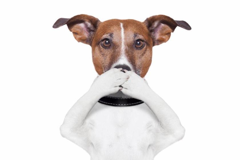 Dog hiding mouth