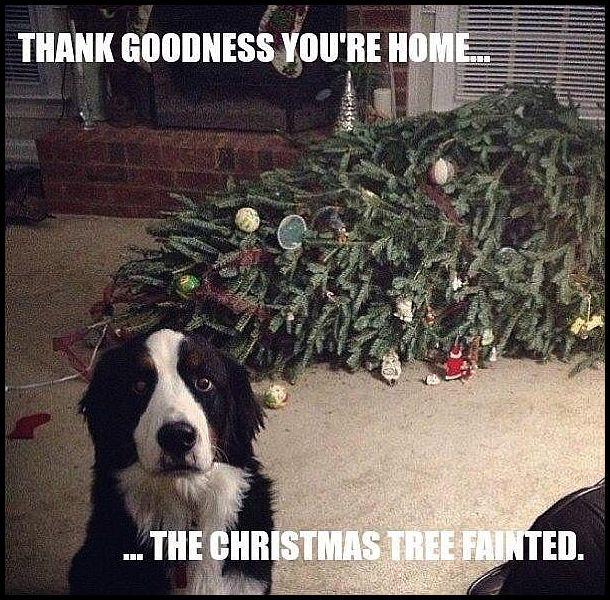 dog-tree-funny