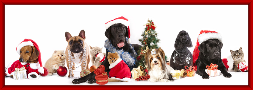 holiday-dogs-and-cats