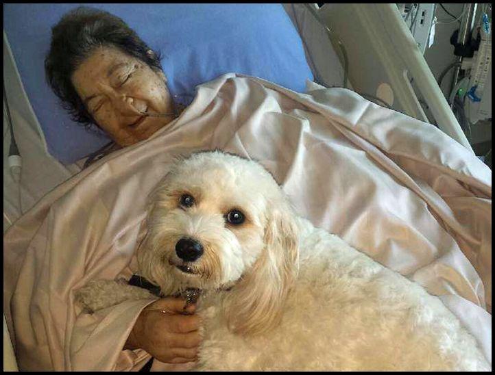 pet-hospital-visit-1