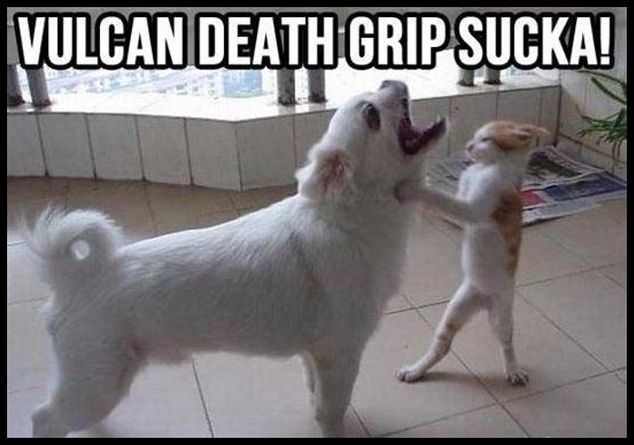 funny-animal-pictures-cat-fighting-dog
