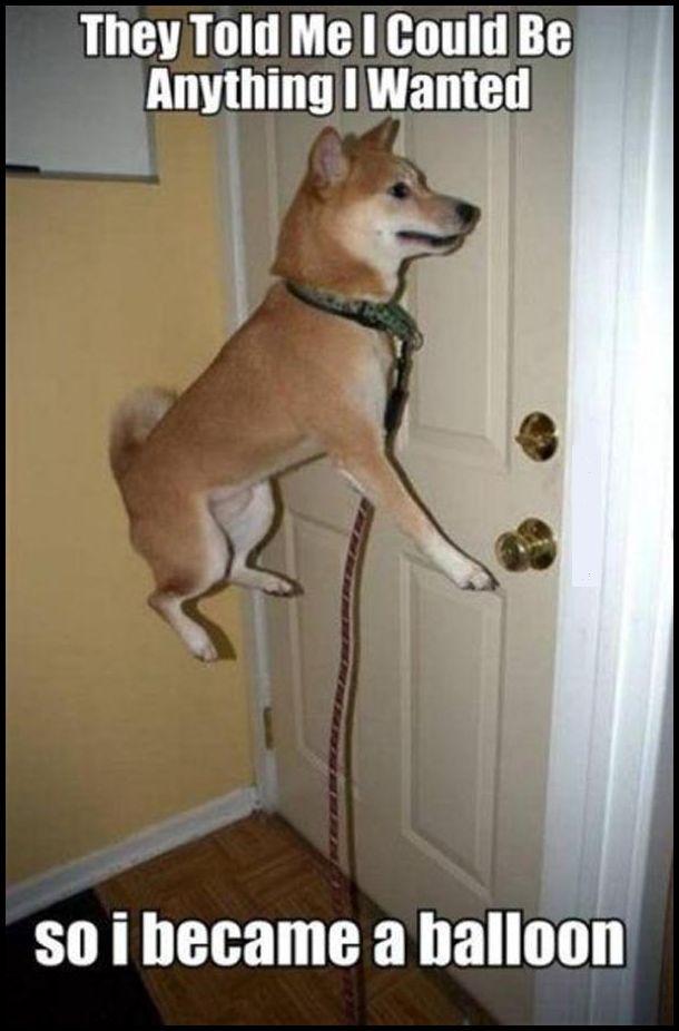 funny-dog-balloon-funny-meme
