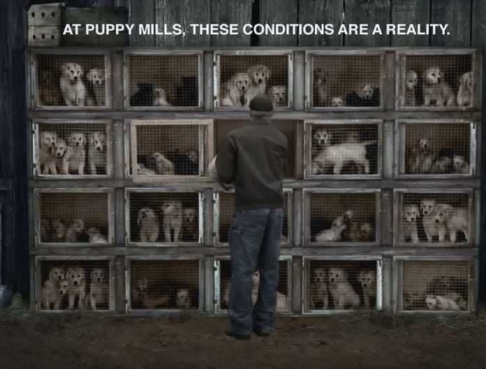 reality-of-puppy-mills-696x529