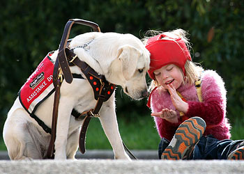 seizure response dog