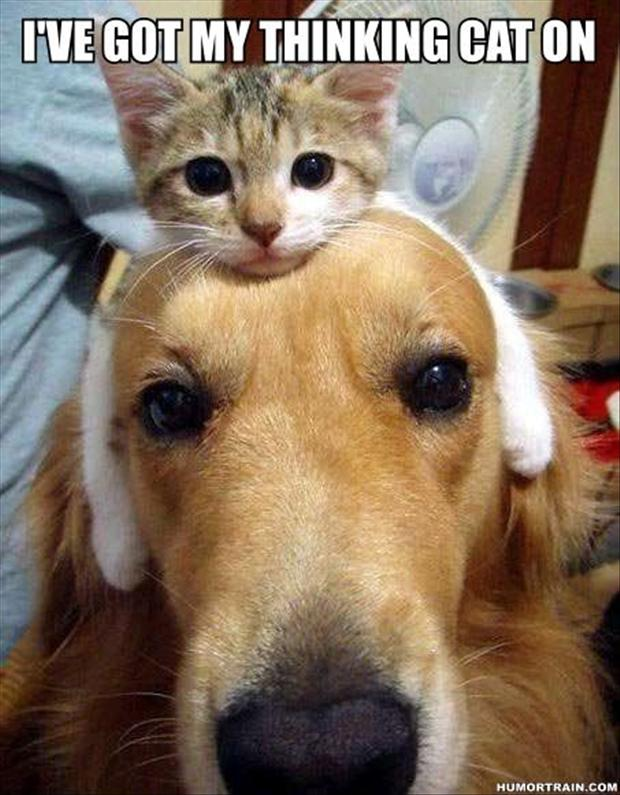 funny-dog-and-cats