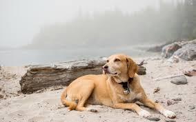 Calm dog