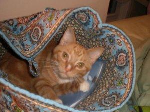 Dante the cat