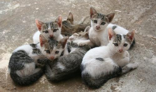 kittens_outdoors