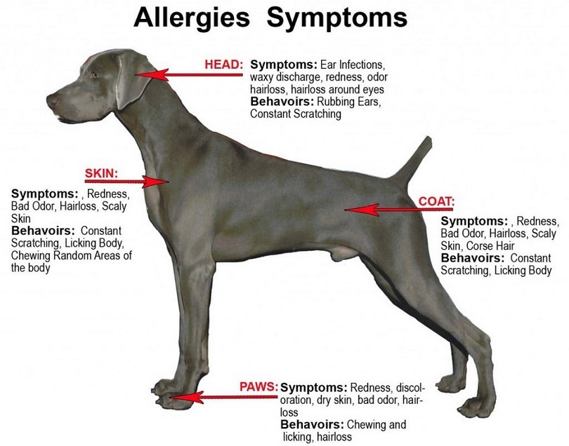Can A Dog Have An Allergy To Cats