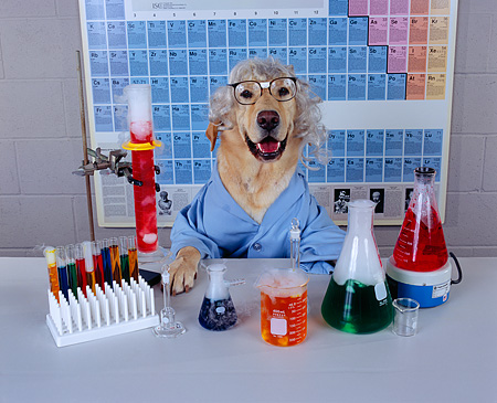 DOG labcoat