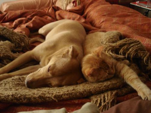 Olivia & Poppy