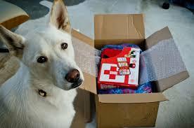 dog-kit