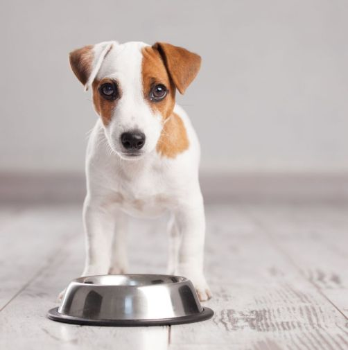 what-can-you-feed-to-your-dog-if-youve-run-out-of-dog-food-57e237a160121