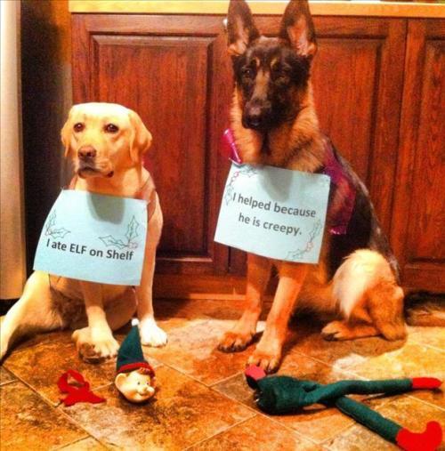dog-shaming-elf-on-the-shelf