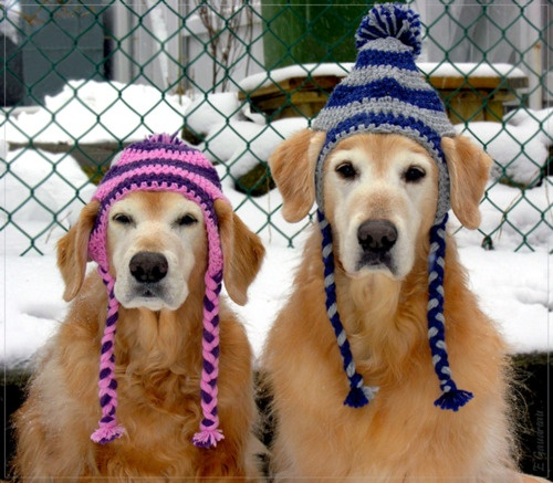 winter-dogs
