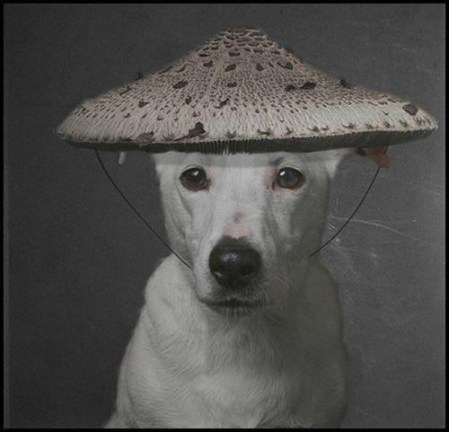 mushroom-hat