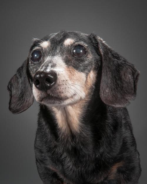 old-dog-2