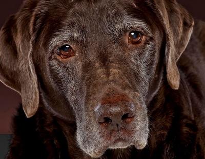 old-dog-3