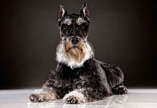 old-dog-5