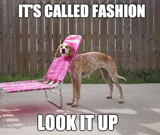 A dog in a deck chair