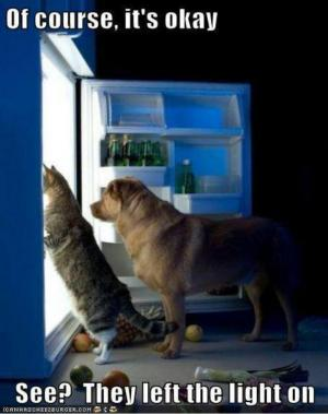Dog & cat looking in fridge