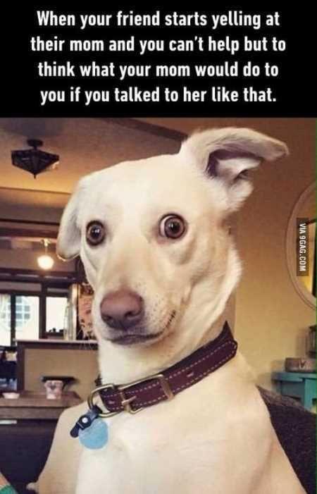 a funny dog meme