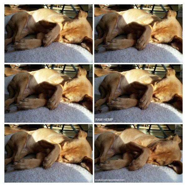 Sleeping dog Olivia