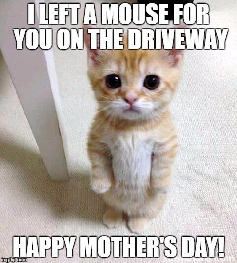 mothers day kitten