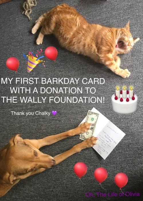Olivia's Barkday Card Drive Poster
