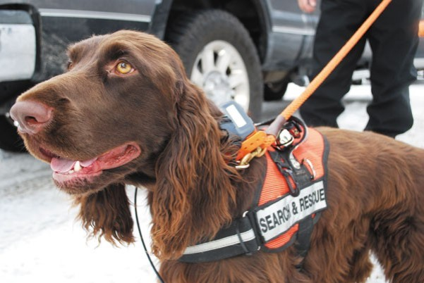 search & rescue dog