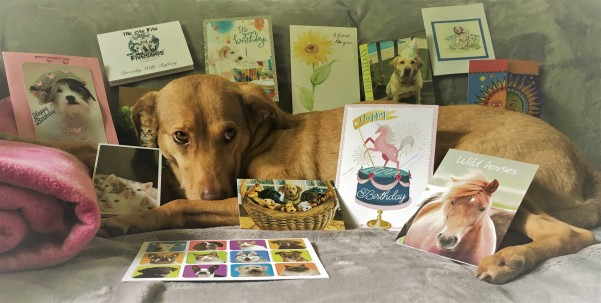 CEO Olivia surrounded by her 8th Barkday cards