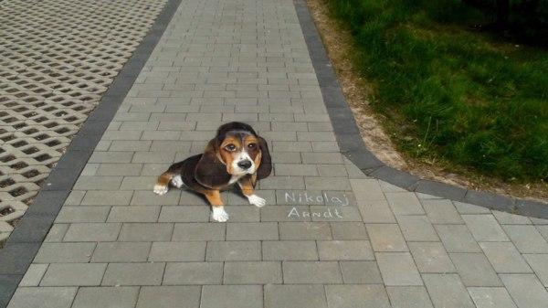sidewalk chalk Beagle