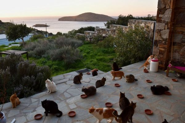 Greek Cat Rescue
