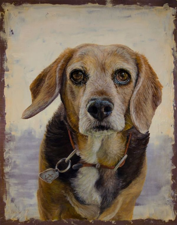 Beagle portrait by Dana Hawk