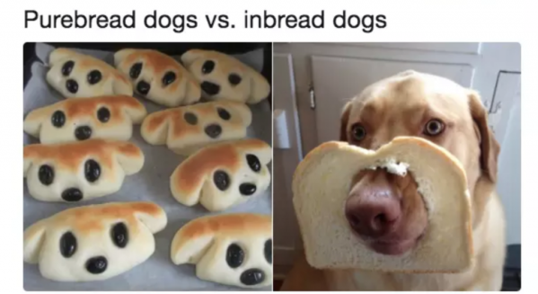 a pun on bread and dogs