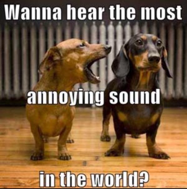 most annoying sound dog style
