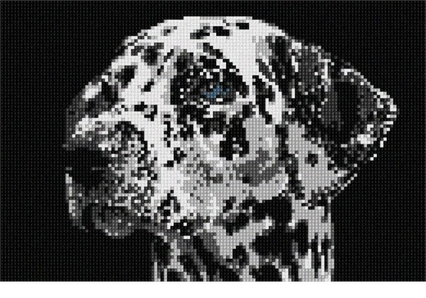 needlepoint dalmation