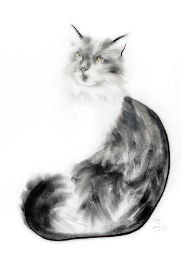 drawing of a cat