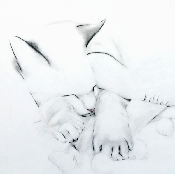 a drawing of a sleeping cat