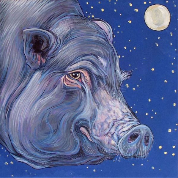 pig in the moonlight