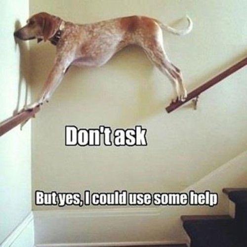 Dog balancing between stairway handrails